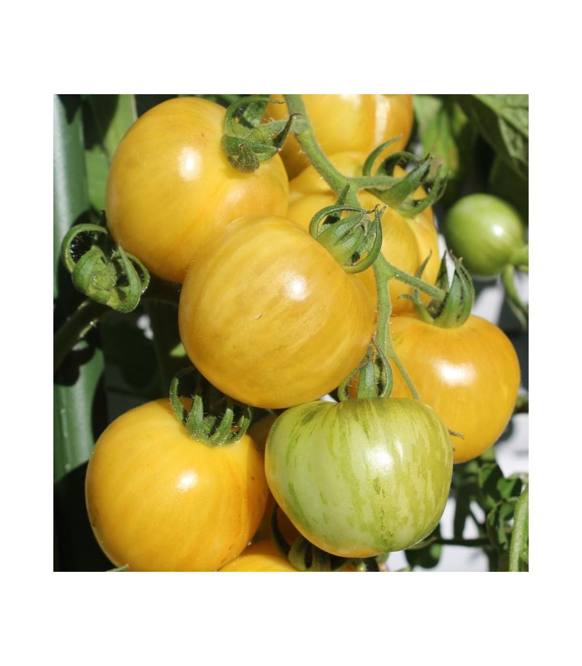 BIO paradajka kolíková Topaz - Lycopersicon esculentum - rajčiak - bio semená rajčiaka - 6 ks