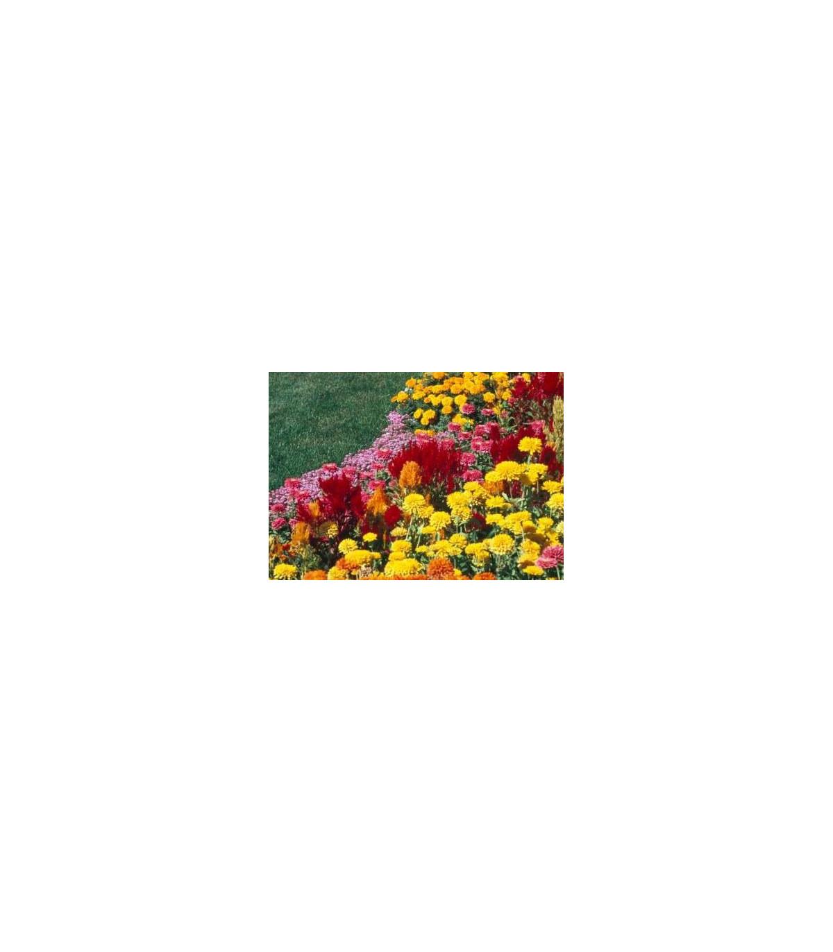 Letničky polovysoké zmes-semená letničiek-0,9 g