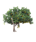 Plodiace stromy