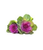 Okrasná zelenina